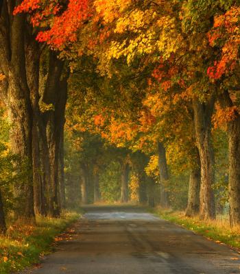 Path through Autumn Trees